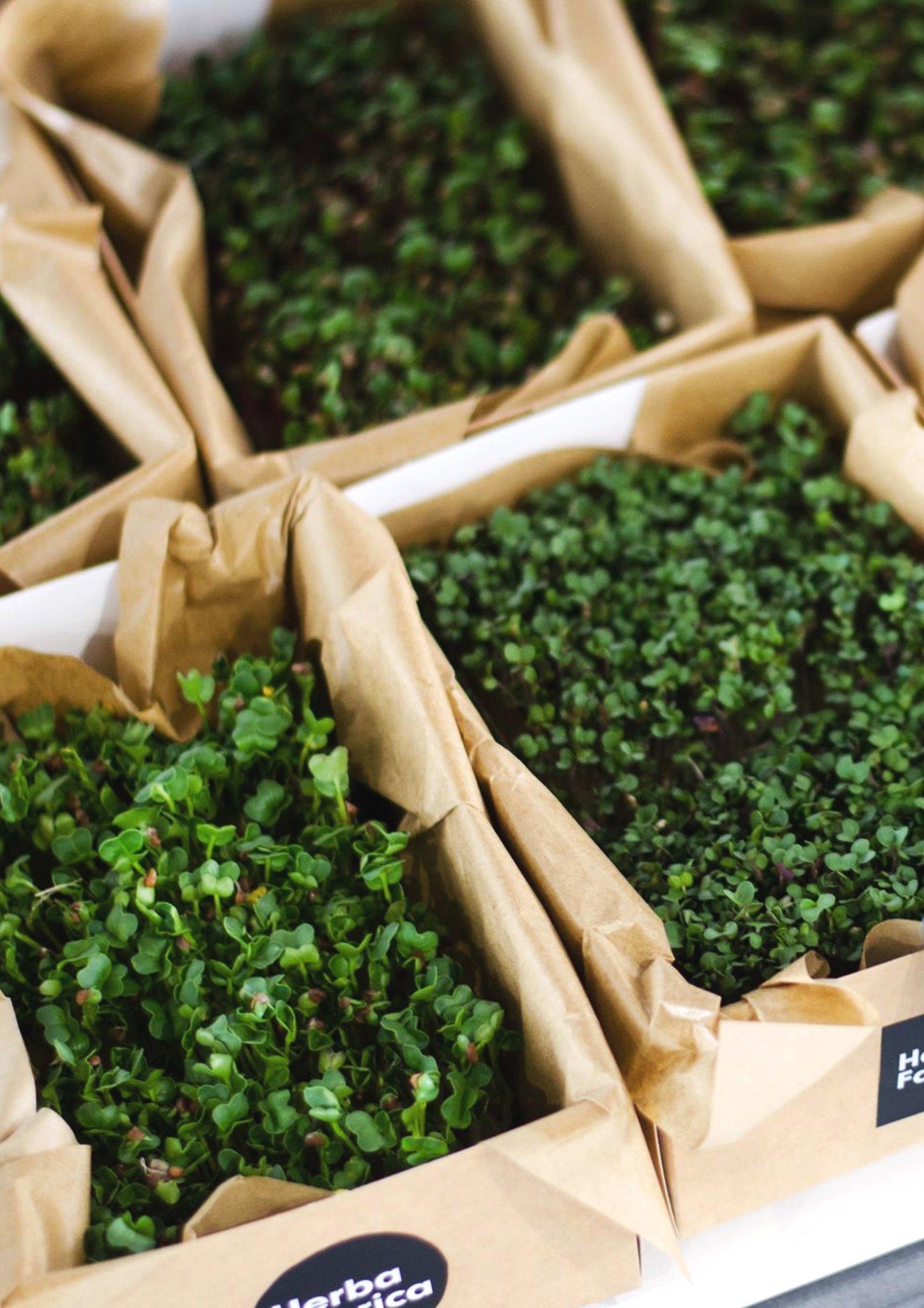 herba-krabicky